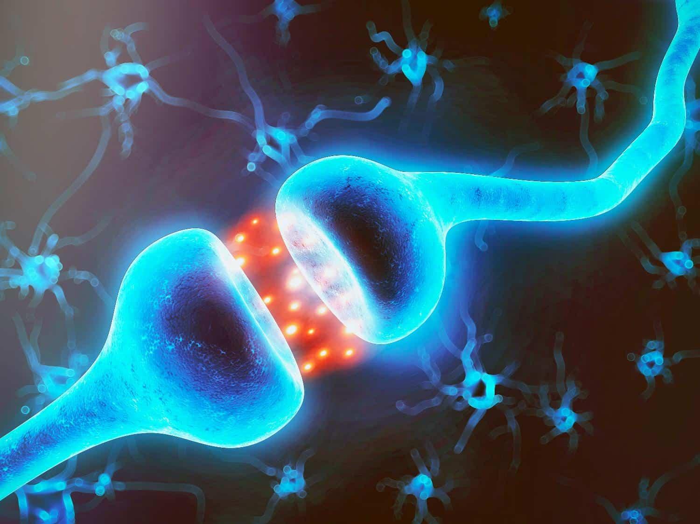 Sinapsis neuronales en acción.